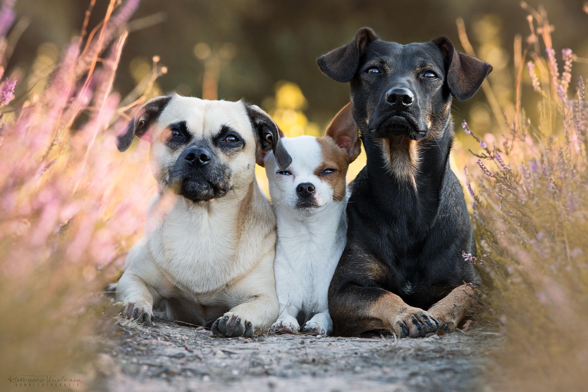 Ninjo,Yasso & Micky